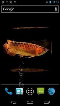 水族馆金龙鱼LWP