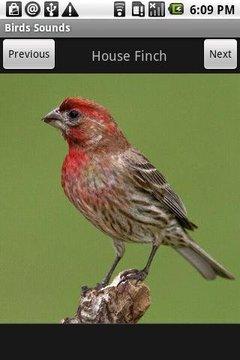 Free Birds Sounds