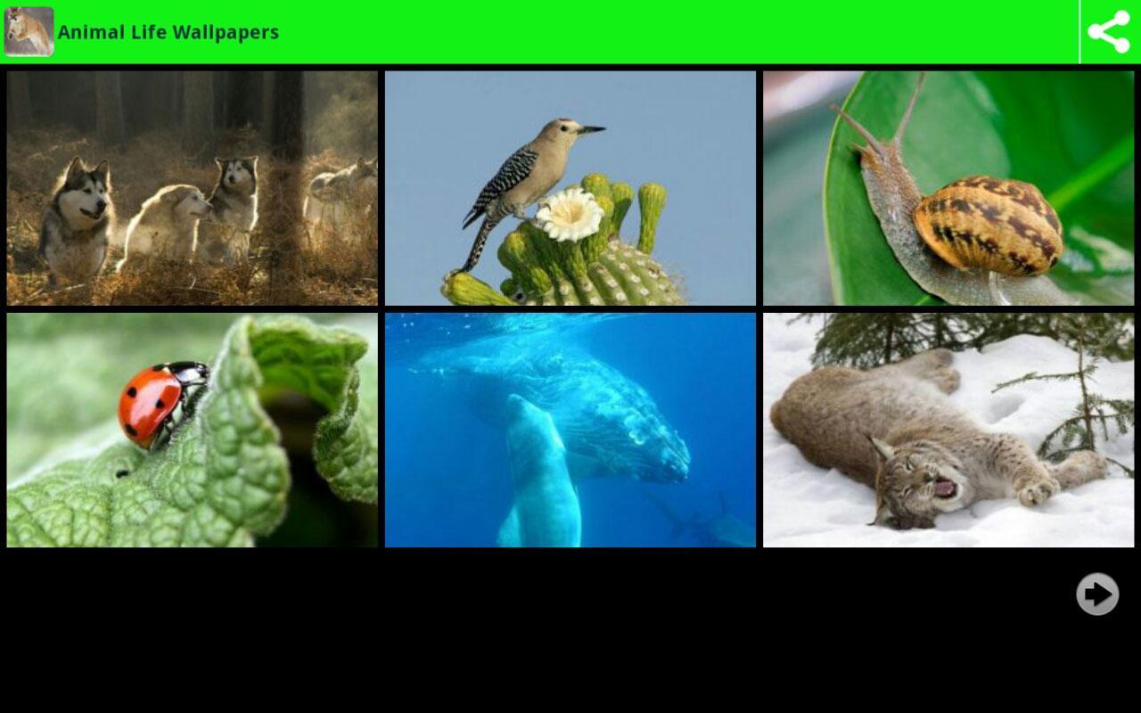 动物的生命壁纸