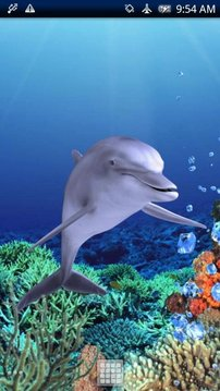 Dolphin Coral Free