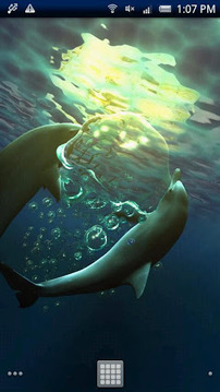 Dolphin RYUKYU Techno Free