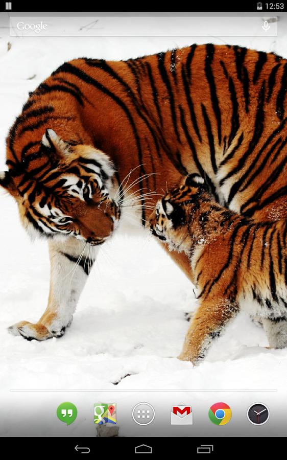大型猫科动物动态壁纸