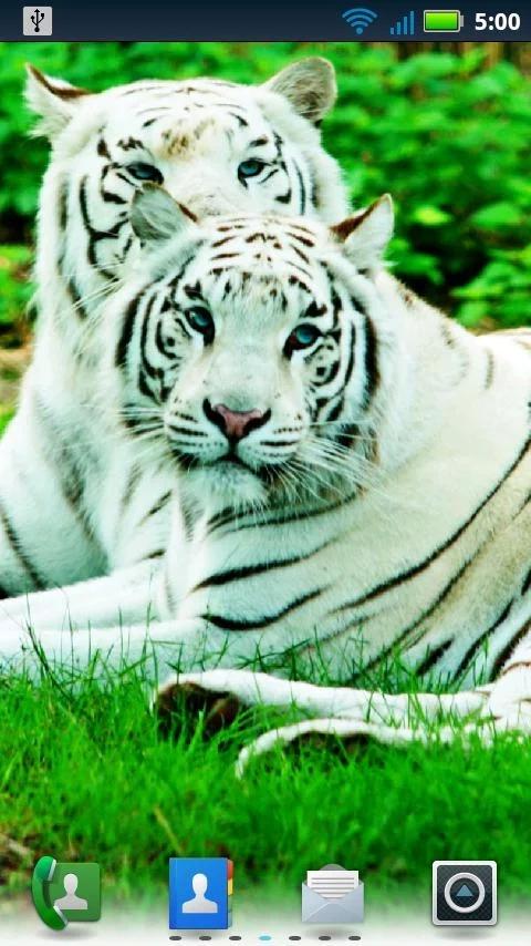 大型猫科动物动态壁纸下载_大型猫科动物动态壁纸手机