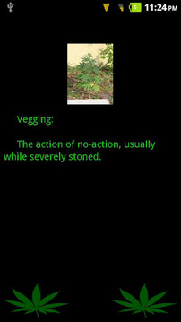Weed Dictionary