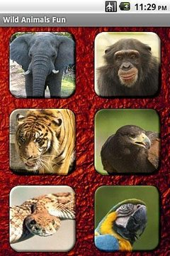 Wild Animals Fun