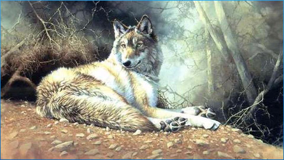 奇妙的动物背景下载