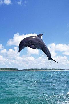 Dolphin Theme