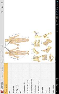 Pocket Atlas of Anatomy TR