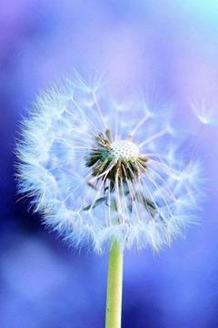 3D Beautiful Flowers
