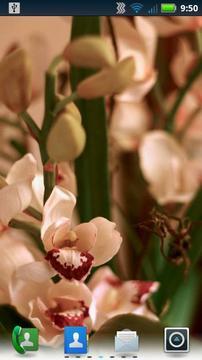 兰花动态壁纸