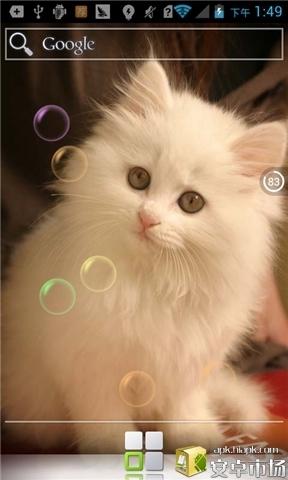 可爱猫咪高清动态壁纸