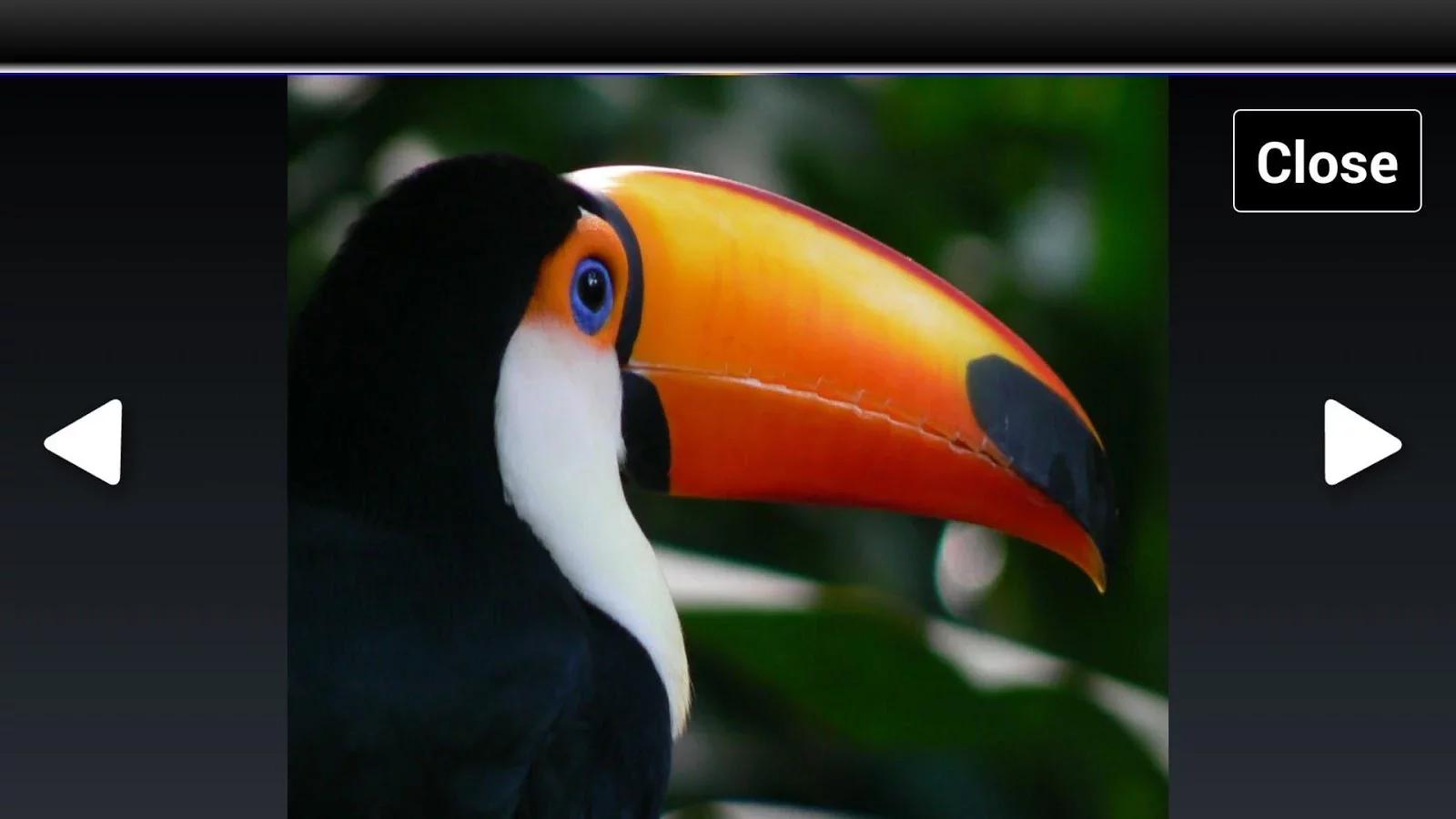 壁纸 动物 鸟 摄影 桌面 1600_900