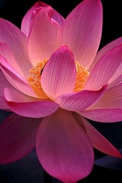 鲜花自然图片高清