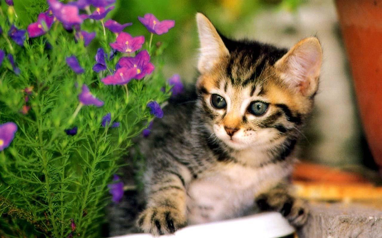 14mb 会说话的猫是一个免费的高清壁纸!  可爱的猫改善你的情绪?