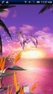 Dolphin Ocean Free