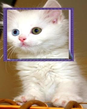 Cat Puzzle Camera 2