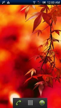 Autumn Colors Trial
