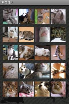 猫猫图片浏览器