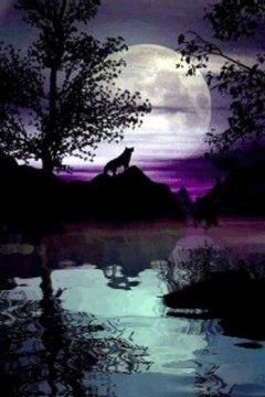 Wolf In The Dark Live Wallpape