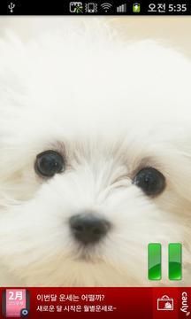 강아지 웃음