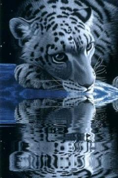 White Tiger Lick Azure Water