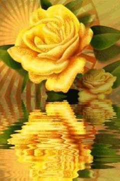 Yellow Rose Reflecting