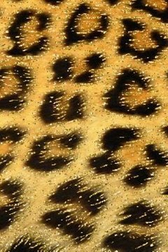 Glitter Leopard Live Wallpaper