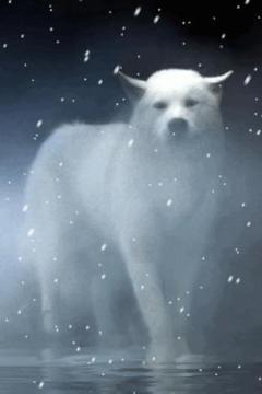 Beautiful White Wolf Live Wal