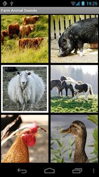 农场动物的声音