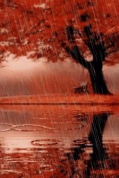 秋季雨景动态壁纸