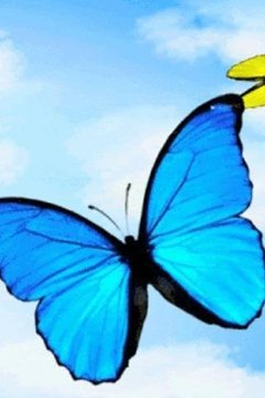 Butterflies In Flight Live Wal