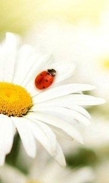 Bug Live Wallpaper