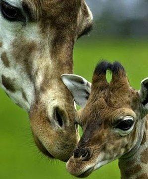 儿童益智动物世界
