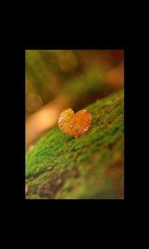 Cute Valentines Heart LWP