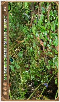 Rain Forest Hidden Objects
