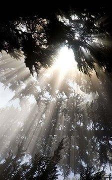 三星S4 - 清晨阳光高清背景