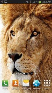Lion The King Live Wallpaper