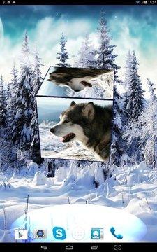 Husky 3D Live Wallpaper FREE