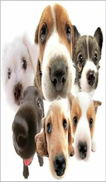 Cute Dog Puppies Slider Puzzle