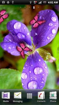 花和粉红的蝴蝶