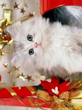 新的小猫圣诞