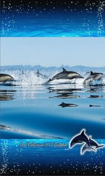 Dolphin Racing Live Wallpaper