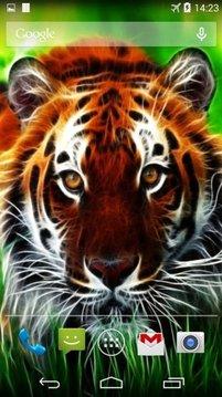 Tigers 3D Live Wallpaper