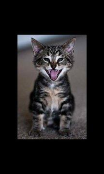 Kitten Galaxy Note2 LWP 8