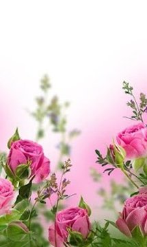 Flower Livewallpaper HD