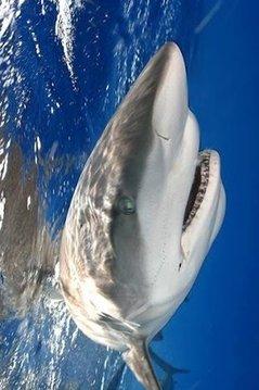 Shark Hungry