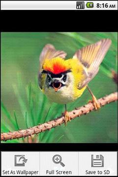奇妙的鸟类摄影