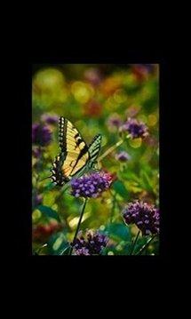 On Flower Live Wallpaper LWP