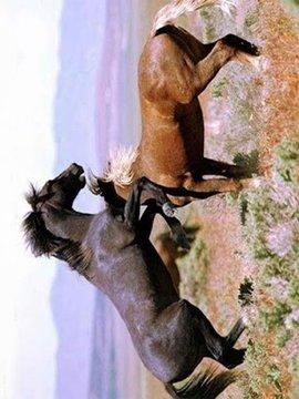 马:精灵的动物