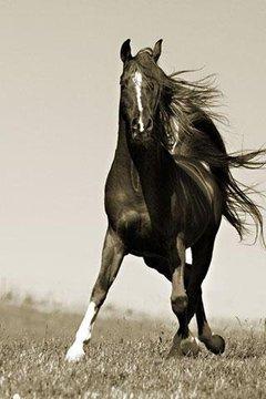 Beautiful Horses Wallpaper
